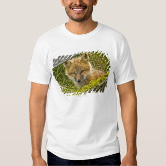 Young Red Fox looking through fence on San Juan T Shirts