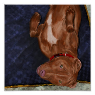 Young Red Nose Pit Bull Laying on his Back Poster