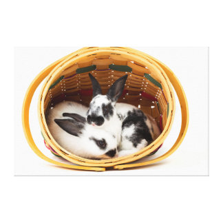 Young Rex rabbits in Easter basket 2 Canvas Print