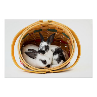 Young Rex rabbits in Easter basket 2 Print