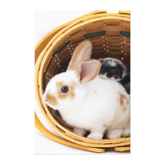 Young Rex rabbits in Easter basket Canvas Print