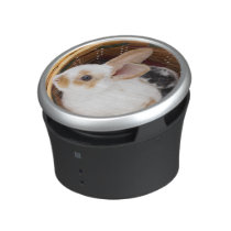 Young Rex rabbits in Easter basket Speaker