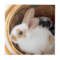 Young Rex rabbits in Easter basket Tile