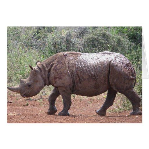 E Rhino Productions Young Rhino Greeting C...