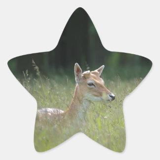 Young Richmond Park deer Star Sticker