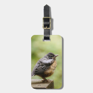 Young Robin Learning To Fly... Taking A Break On Luggage Tag