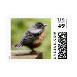 Young Robin Learning To Fly... Taking A Break On Postage