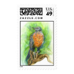 Young Robin Postage Stamps