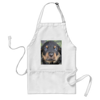 Young Rottweiler (Clyde) Adult Apron