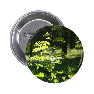 Young sapling acacia pinback button