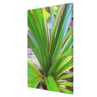 Young Screw Pine Canvas Print