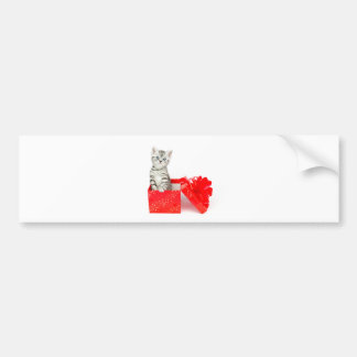 Young silver tabby cat standing in red box bumper sticker