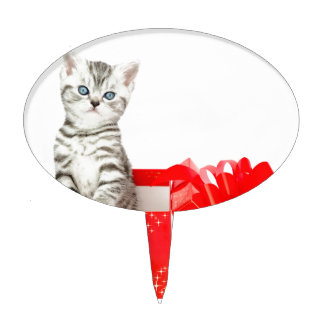 Young silver tabby cat standing in red box cake topper