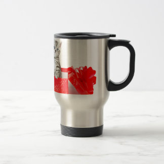 Young silver tabby cat standing in red box travel mug