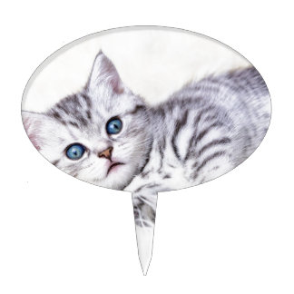 Young silver tabby spotted cat lying on sheep skin cake topper