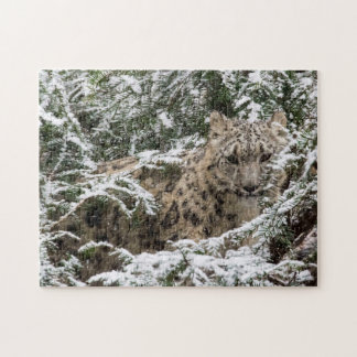 Young Snow Leopard Jigsaw Puzzle