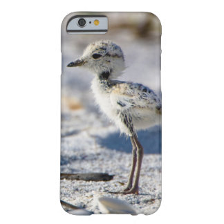 Young Snowy Plovers (Charadrius alexandrinus) Barely There iPhone 6 Case