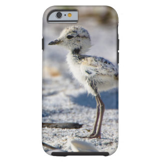 Young Snowy Plovers (Charadrius alexandrinus) Tough iPhone 6 Case
