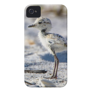 Young Snowy Plovers (Charadrius alexandrinus) Case-Mate iPhone 4 Case