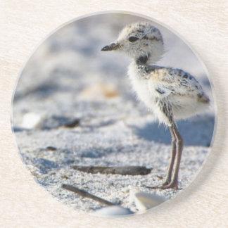 Young Snowy Plovers (Charadrius alexandrinus) Coaster