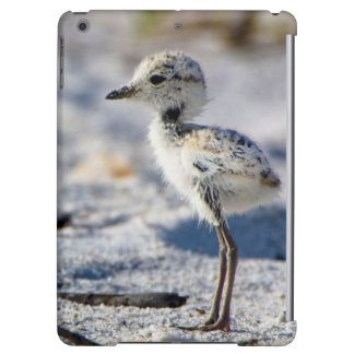 Young Snowy Plovers (Charadrius alexandrinus) Cover For iPad Air