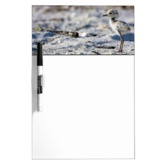 Young Snowy Plovers (Charadrius alexandrinus) Dry Erase Board