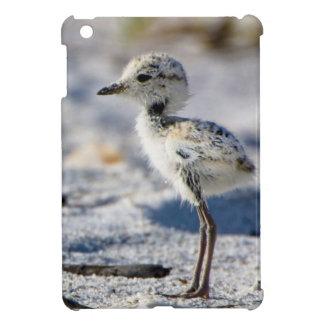 Young Snowy Plovers (Charadrius alexandrinus) iPad Mini Cover