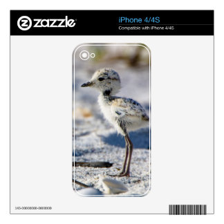 Young Snowy Plovers (Charadrius alexandrinus) iPhone 4S Skin