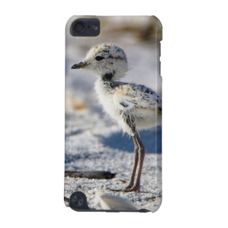 Young Snowy Plovers (Charadrius alexandrinus) iPod Touch (5th Generation) Case