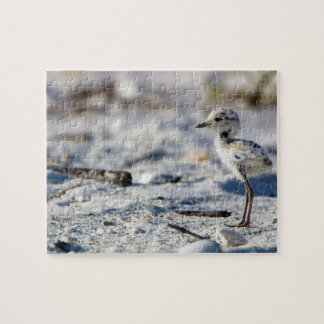 Young Snowy Plovers (Charadrius alexandrinus) Jigsaw Puzzle