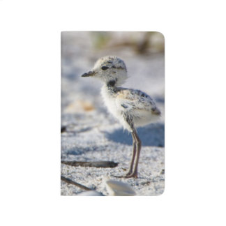 Young Snowy Plovers (Charadrius alexandrinus) Journal