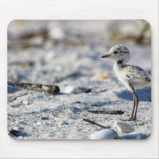 Young Snowy Plovers (Charadrius alexandrinus) Mouse Pad