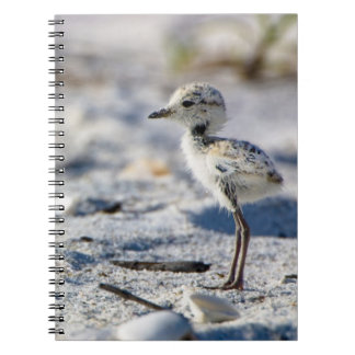 Young Snowy Plovers (Charadrius alexandrinus) Notebook
