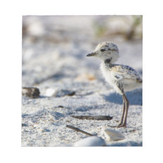 Young Snowy Plovers (Charadrius alexandrinus) Notepad