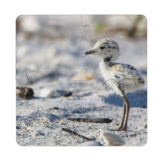 Young Snowy Plovers (Charadrius alexandrinus) Puzzle Coaster