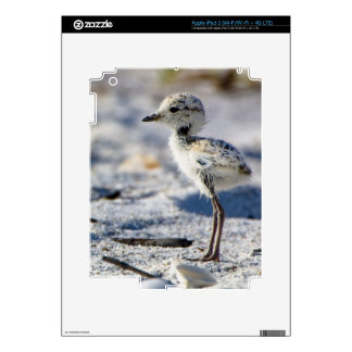 Young Snowy Plovers (Charadrius alexandrinus) Skin For iPad 3