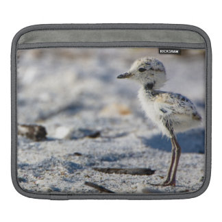 Young Snowy Plovers (Charadrius alexandrinus) Sleeve For iPads