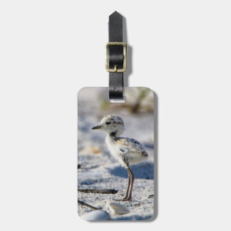 Young Snowy Plovers (Charadrius alexandrinus) Tag For Luggage