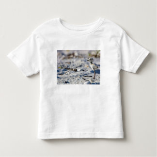 Young Snowy Plovers (Charadrius alexandrinus) Toddler T-shirt