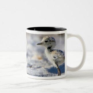 Young Snowy Plovers (Charadrius alexandrinus) Two-Tone Coffee Mug