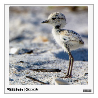 Young Snowy Plovers (Charadrius alexandrinus) Wall Sticker