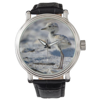 Young Snowy Plovers (Charadrius alexandrinus) Wristwatch