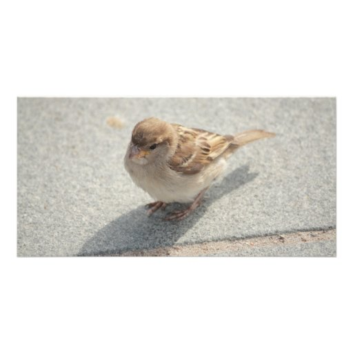 young sparrow personalized photo card