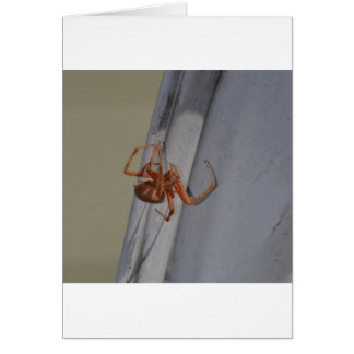 Young Spider spins a web Card