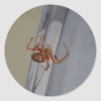 Young Spider spins a web Classic Round Sticker