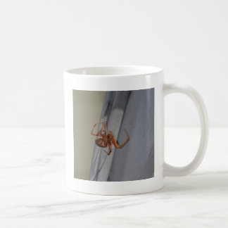 Young Spider spins a web Classic White Coffee Mug