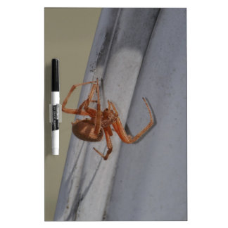 Young Spider spins a web Dry Erase Board