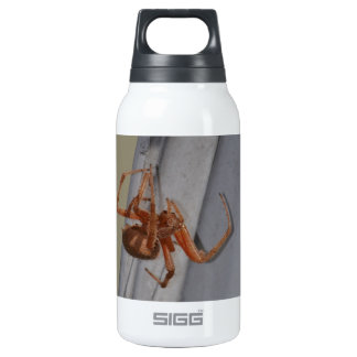 Young Spider spins a web Insulated Water Bottle