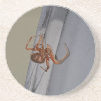 Young Spider spins a web Sandstone Coaster