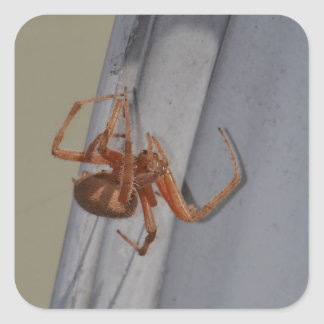 Young Spider spins a web Square Sticker